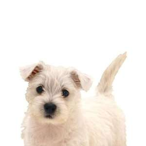 Animals Puppy Love West Highland terrier KP1197SA: Home Improvement