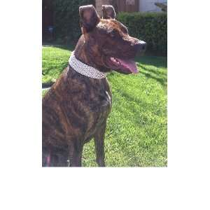 10 Row Swarovski Crystal Rhinestone Dog Collar Fitz 19 22