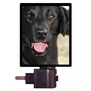 Dog Night Light   Black Lab   Labrador Retriever LED NIGHT