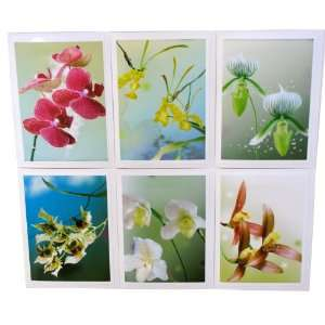 Orchid Photography Note Cards Flower Photographs Art Greeting Card 5x7
