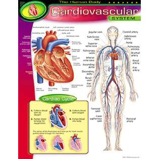 ERC Quality Chart Cardiovascular System By Trend Enterprises at