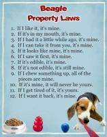 Property Laws   BEAGLE   Dog Magnet