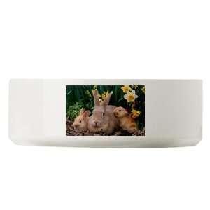 Large Dog Cat Food Water Bowl Spring Easter Rabbits