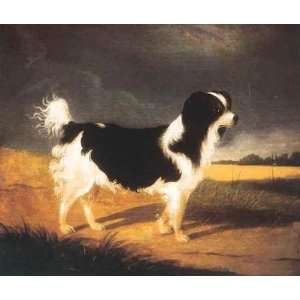 King Charles Spaniel Poster Print: Home & Kitchen
