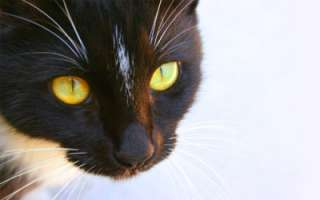Cat Digital Image JPEG Desktop Wallpaper FREE DELIVERY